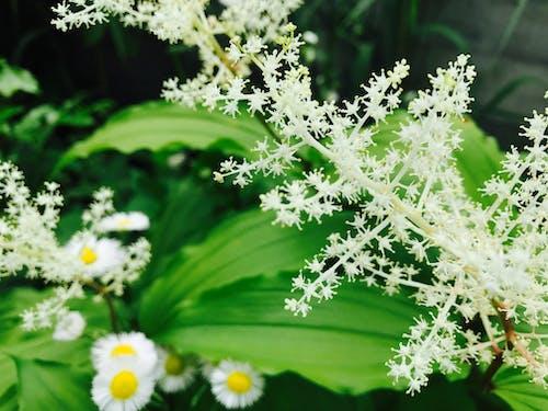 Foto stok gratis alam, botani, bunga-bunga, flora