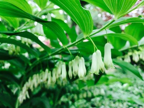 Foto stok gratis alam, bel, berfokus, botani
