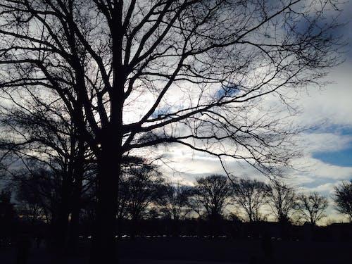 Foto stok gratis alam, awan, biru, cabang