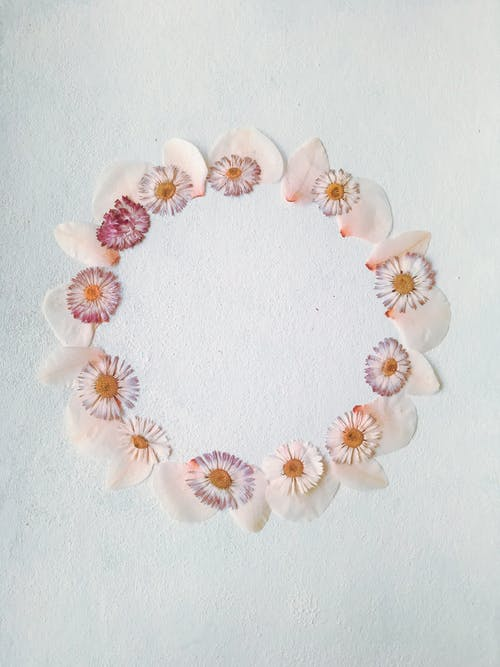 From above of round frame with tender rose petals and daisy flower heads placed on white background