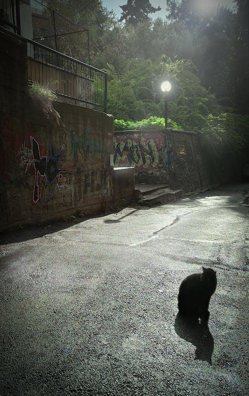 Kostenloses Stock Foto zu rücklicht, schwarze katze