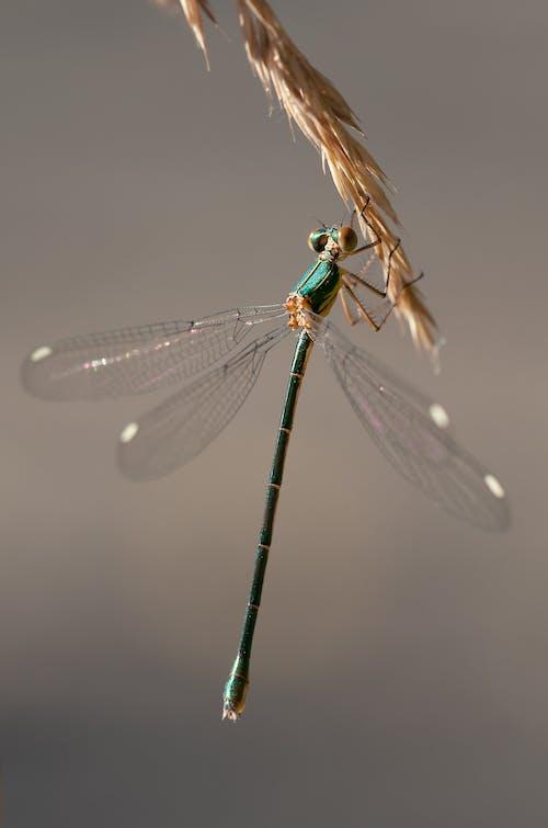 Бесплатное стоковое фото с максросъемка, насекомое, равнокрылая стрекоза, снимок крупным планом