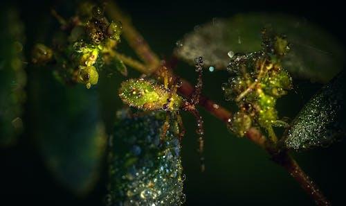 Gratis lagerfoto af blad, blomst, dug, dyreliv