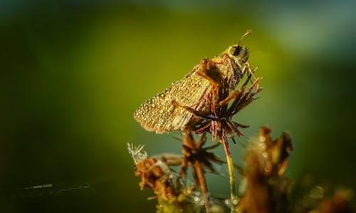 Gratis lagerfoto af antenne, behåret, Bille, blad