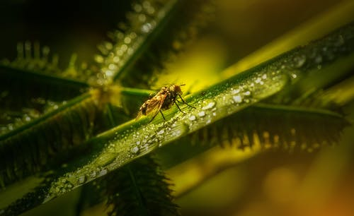 Gratis lagerfoto af antenne, blad, blomst, dug