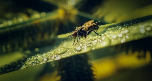 Gratis lagerfoto af bi, Bille, blad, blomst