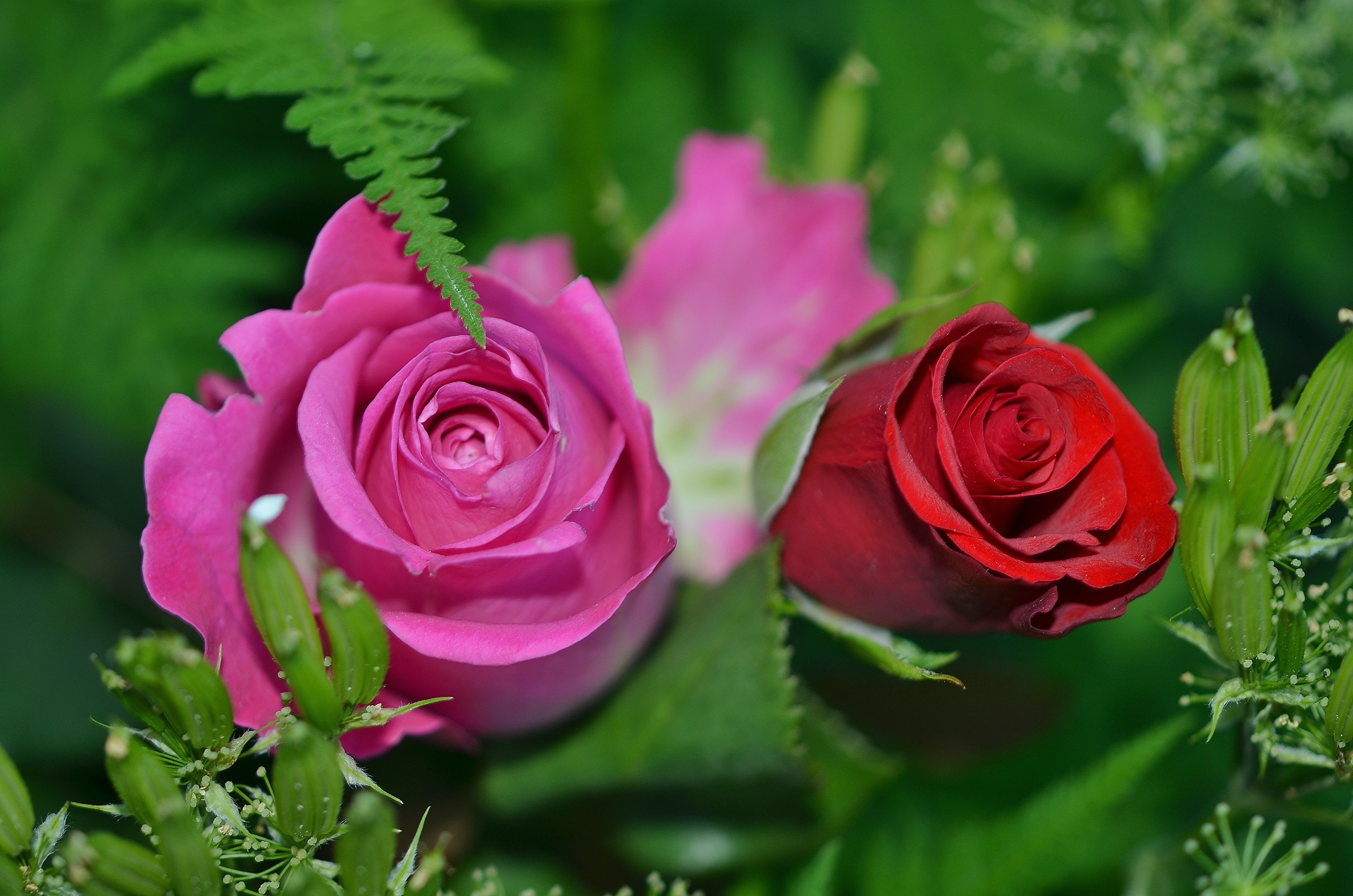 To acquire Photos Nature flowers picture trends