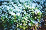 snow, winter, white
