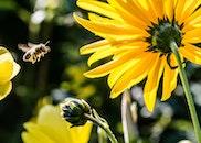 flowers, plant, bee