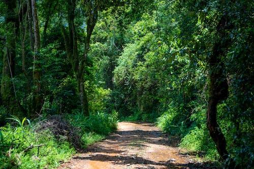Imagine de stoc gratuită din arbori, cale, codru