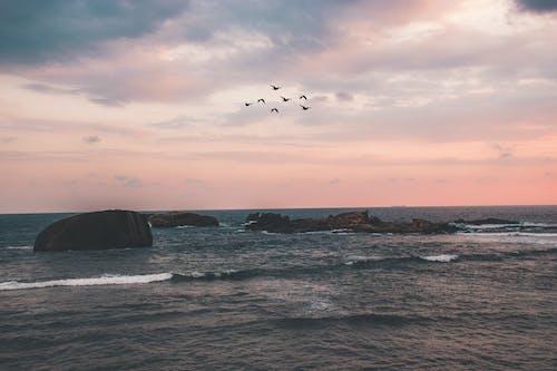 Free stock photo of beautiful sea, flock of birds, galle