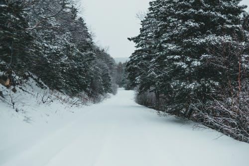 Snowy road among trees in winter time