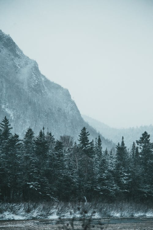 Coniferous forest against snowy mountains in winter time