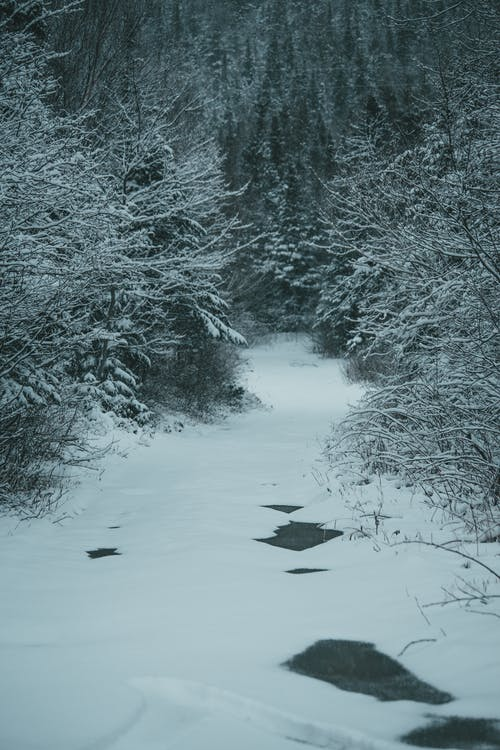 Picturesque landscape of snow covered half frozen creek flowing under ice among trees in forest in winter time in daylight