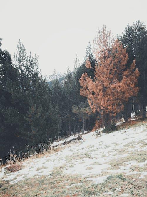 Pohon Hijau Dan Coklat Di Bawah Langit Putih