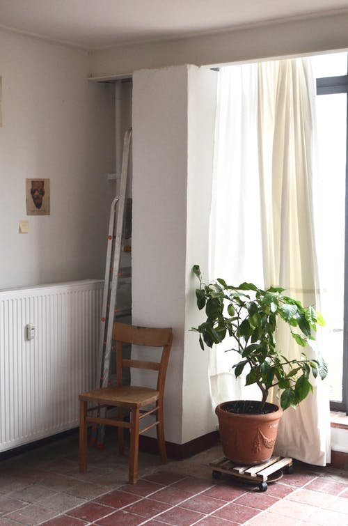 Interior of room with potted plant and chair near window