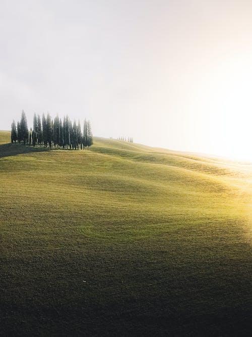 Fotos de stock gratuitas de agricultura, al aire libre, amanecer