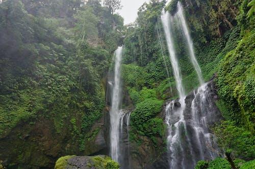 Free stock photo of bali, nature, tropical