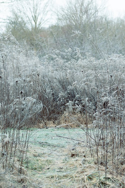 Free stock photo of cold, environment, flora, frost