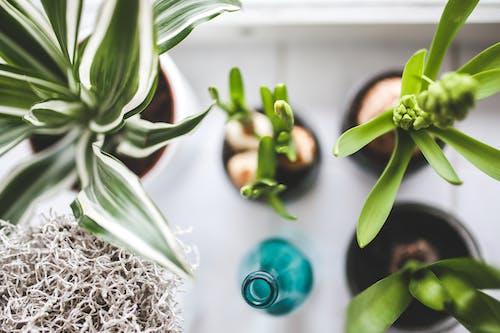 Fotobanka sbezplatnými fotkami na tému rast, rastliny