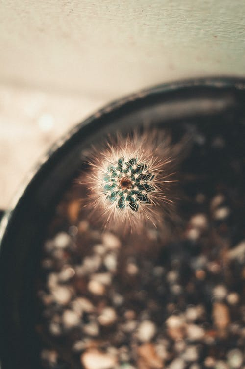 Top view of cactus with thick stem and barbed edges growing on blurred background