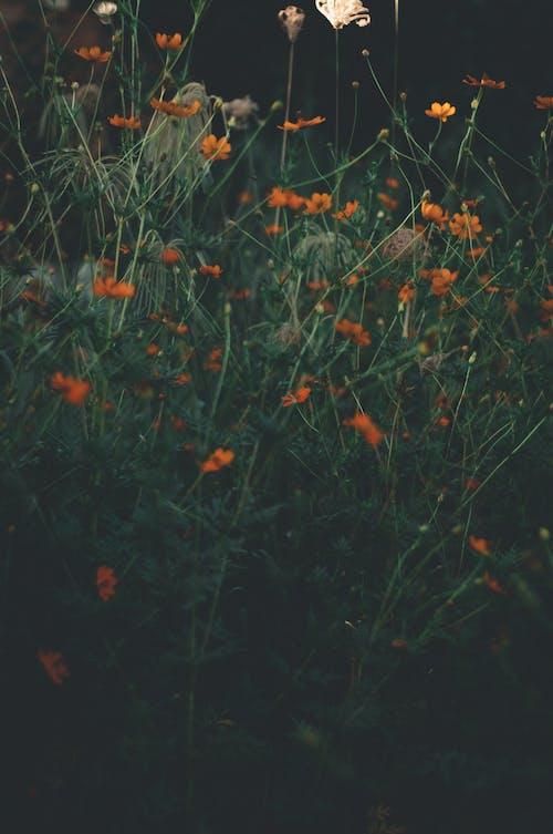Gratis stockfoto met aangenaam, aroma, avond