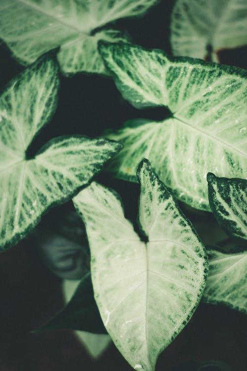 Ảnh lưu trữ miễn phí về ánh sáng ban ngày, araceae, bối cảnh