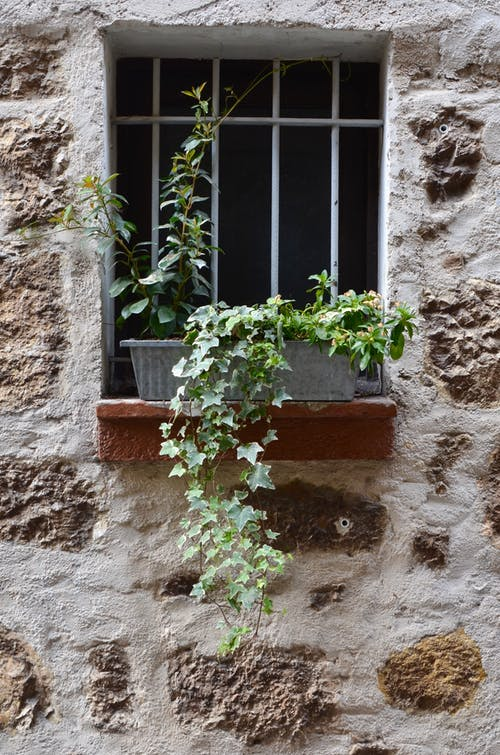 Exterior of aged building with stone wall and green potted plants on windowsill near window grill in daylight