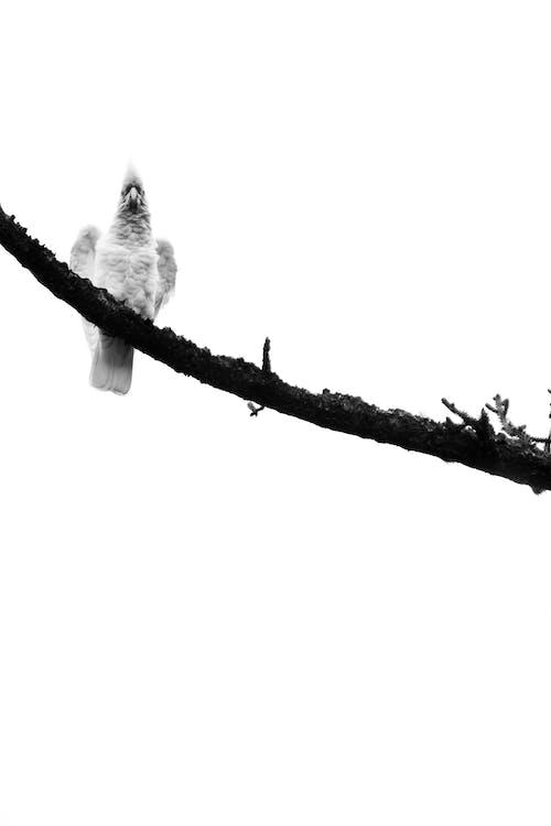 Kostenloses Stock Foto zu hohe höhe, kontrast, minimal, minimalismus