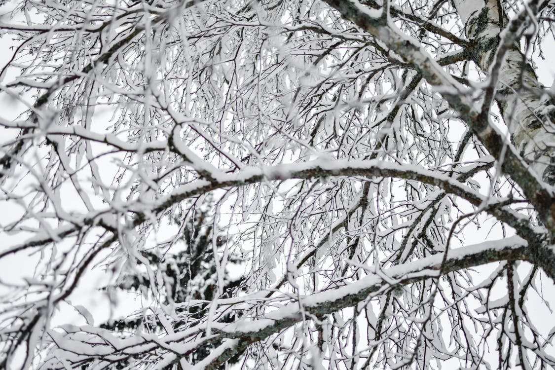 White and Black Tree Branches