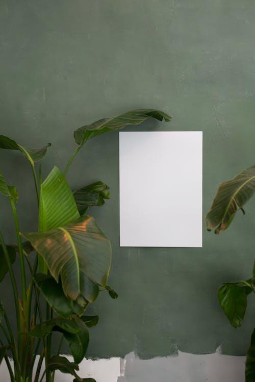 Daun Hijau Di Kertas Putih