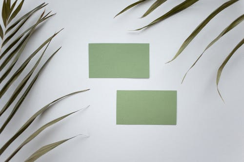 Top view of green mock up business cards placed on white background near plant with lush leaves in modern studio