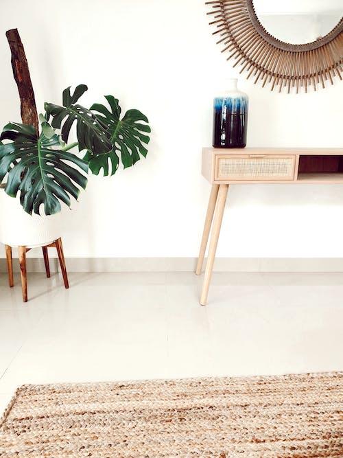 Free stock photo of comfortable, decor, decorative plants
