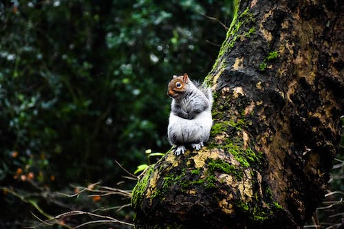 Free stock photo of forest, squirrel, trees