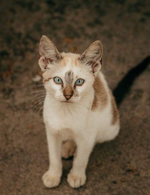 White and Brown Cat on Brown Soil