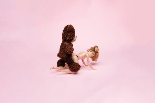 Free stock photo of bdsm, bear, couple, erotic