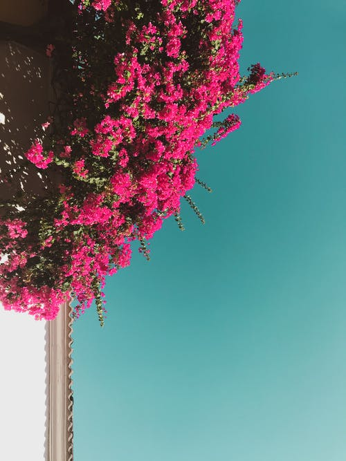 Photos gratuites de amour, arbuste, bleu