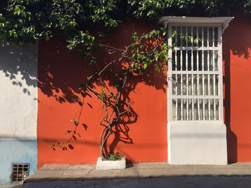 Photos gratuites de arbre, architecture, art