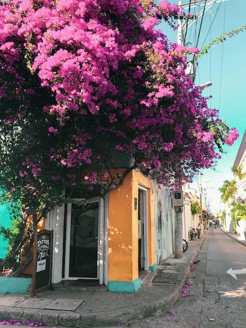 傳統, 哥倫比亞, 城市 的 免費圖庫相片