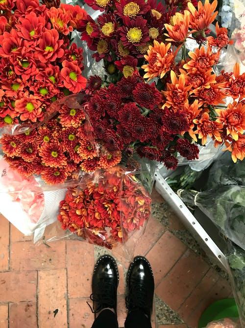 Photos gratuites de automne, bouquet, brillant