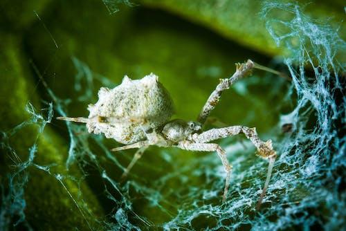 Коричневый паук на паутине в фотографии крупным планом