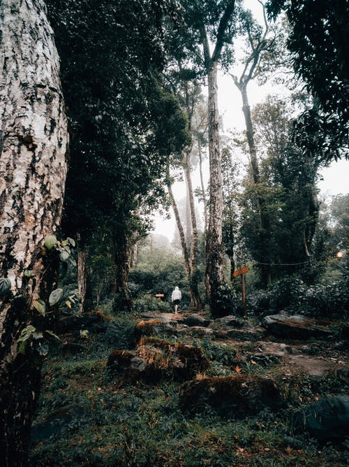 Faceless person walking in lush misty forest