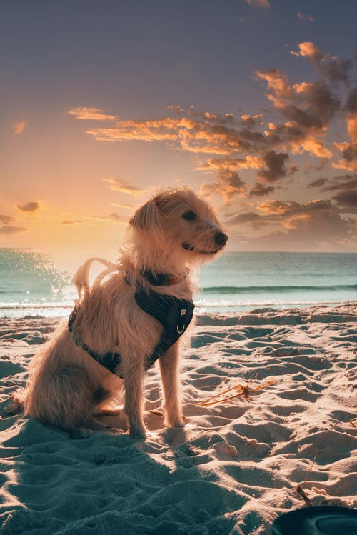 Free stock photo of beach, dawn, dog, dusk