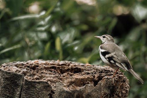 Kahverengi Ağaç Dalı üzerinde Siyah Beyaz Kuş
