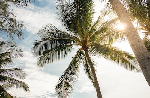 Palmeira Verde Sob O Céu Azul