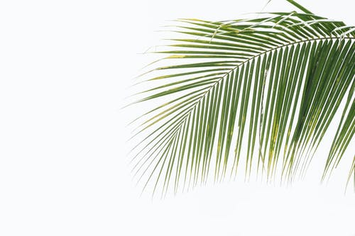 Textured backdrop of exotic green plant foliage with spots and thin stalk with curved surface