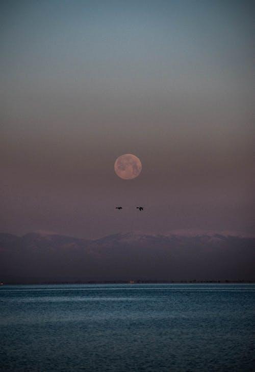 Free stock photo of beach, birds, birds above the moon, blue