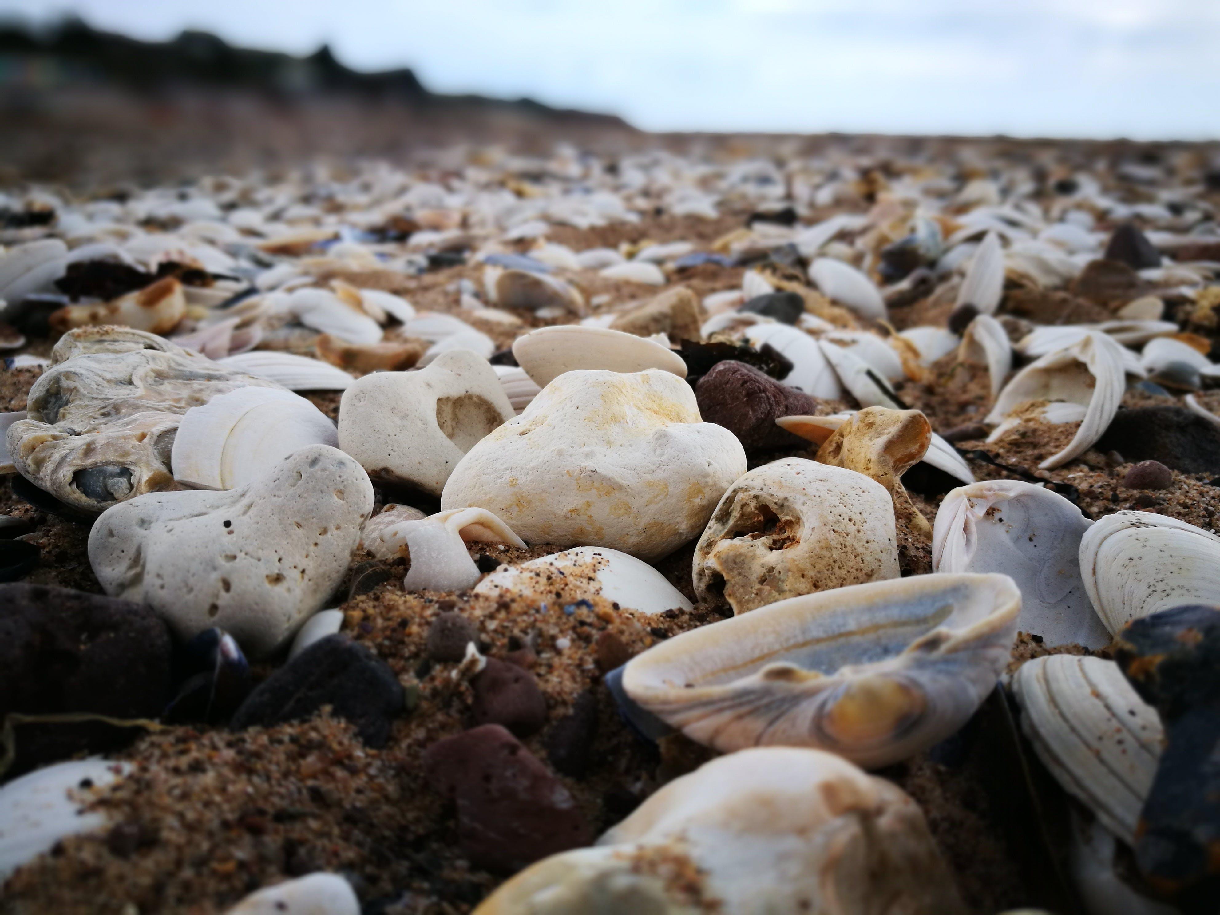 alan derinliği, çakıl Taşları, deniz, deniz kabuğu içeren Ücretsiz stok fotoğraf