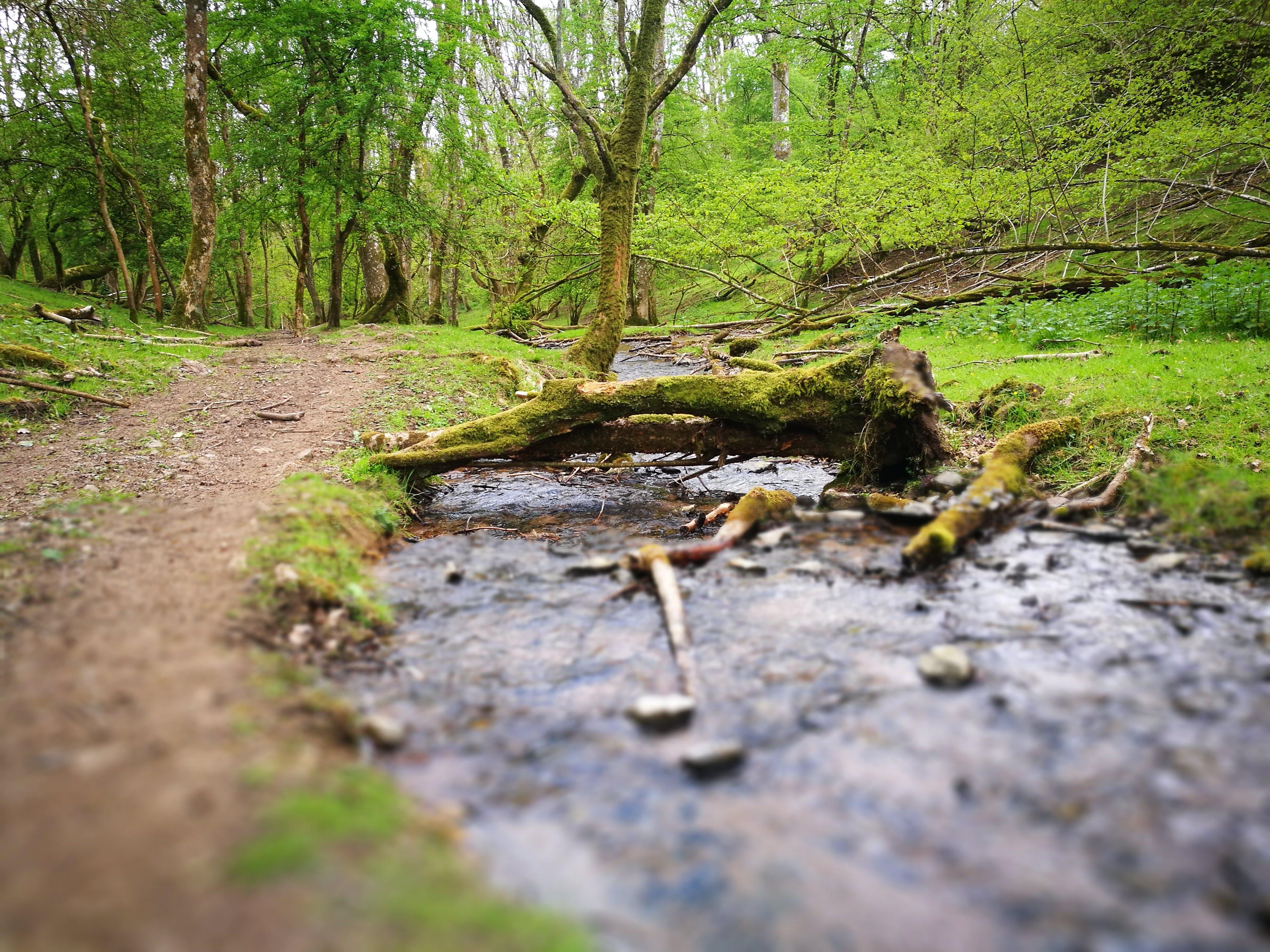 Základová fotografie zdarma na téma lesnatý kraj, padlý strom, proud, stezka