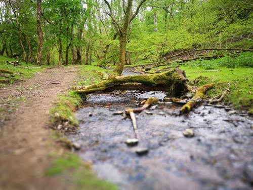 Free stock photo of fallen tree, footpath, stream, trees
